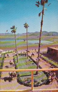 Turf Paradise Phoenix Arizona