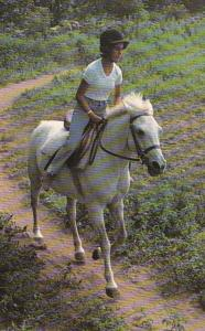 Horses Cantering On A White Mare