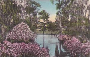 South Carolina Charleston The Azalea Pool Middleton Place Gardens Albertype