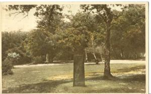 UK, New Forest, Rufus Stone, 1959 used Postcard
