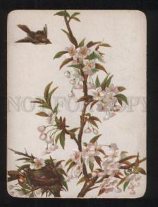 068208 BIRD on Tree FLOWERS Style KLEIN old Card