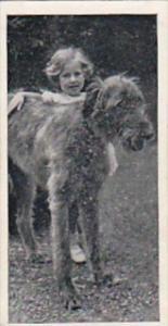 Carreras Cigarette Card Dogs &  Friends No 50 Irish Wolfhound