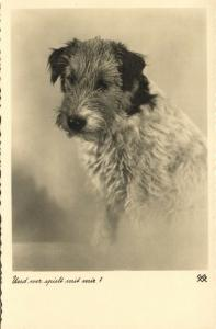 Dog Postcard Terrier (1930s) RPPC (2)