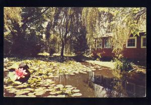 Westfield, Massachusetts/MA/Mass Postcard, Lily Pond At Stanley Park