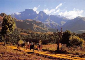 South Africa Natal Drakensberg Horse Riding Champagne Castle Cathkin Park