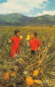 HI, Hawaii  TWO BOYS EATING PINEAPPLE~Del Monte Field   1969 Chrome Postcard