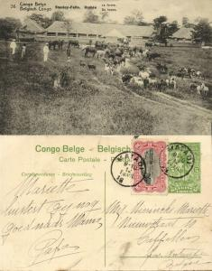 belgian congo, ROMÉE, STANLEY-FALLS, Farm with Cattle (1920s) Postcard (36)