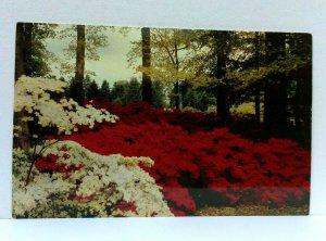 Winterthur Delaware Winterthur Gardens Postcard