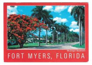 FL Fort Myers McGregor Boulevard Royal Palms Vintage 4X6 Florida Postcard