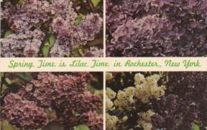 Flowers Spring Time Is Lilac Time In Rochester New York Lilac Capitol Of The ...