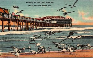 Maine Old Orchard Beach Feeding The Sea Gulls From The Pier