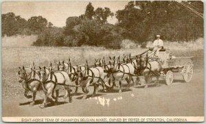 1936 Stockton, California Postcard Eight-Horse Team of Champion Belgian Mares