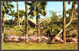 Flamingos,Busch Gardens,Tampa,FL Birds