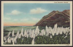 Cone Blossoms,Honolulu,HI Postcard