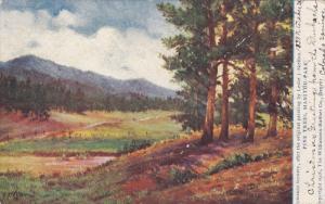 COLORADO SPRINGS, Colorado, PU-1906; Pine Trees, Manitou Park
