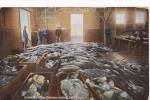 Washington Columbia River Salmon Waiting For Shipment