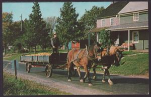 Greetings From Amish Country Postcard