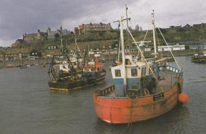 The Fish Market Folkestone Kent Harbour Limited Edition Postcard