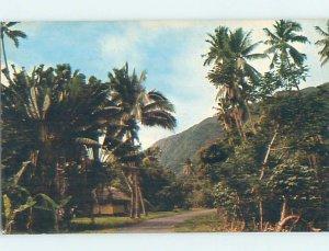 Pre-1980 NATURE SCENE Road To Taurita Tahiti AD6220