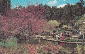 North Carolina Durham One Of The Many Beautiful Scenes In Duke Gardens