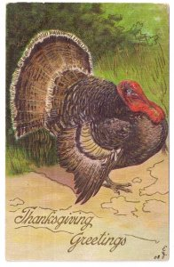 Thanksgiving Tom Turkey Embossed Moire Background Vintage1908 Postcard