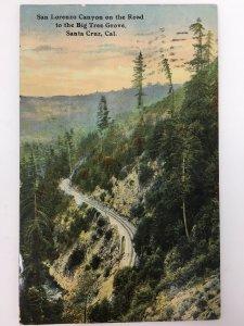 c. 1913 Santa Cruz Calif Postcard San Lorenzo Canyon Big Tree Grove