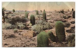 Devil's Garden near Palm Springs, CA Hand-Colored Postcard *5N19