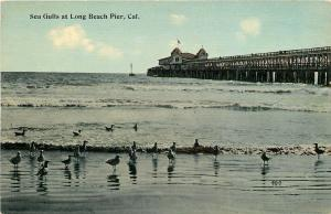 Long Beach California~Pier~Sea Gulls Wade in Pacific Ocean~1908 Postcard