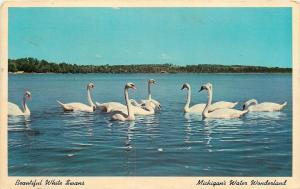 Chain O Lakes Michigan~Water Wonderland~White Swans~1920s Postcard