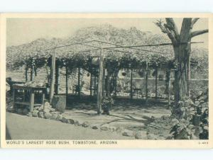 Unused 1940's WORLD'S LARGEST ROSE BUSH Tombstone Arizona AZ E6275-22