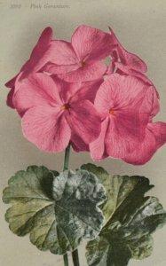 Pink Geranium Flower , 00-10s