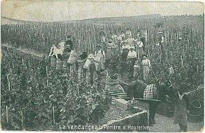 Ansichtskarten POSTCARD: SWITZERLAND - ETHNIC: WINE - HAUTERIVE 1907