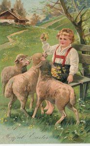 EASTER, 1900-10s; Boy holding up yellow flowers for sheep, PFB 6733