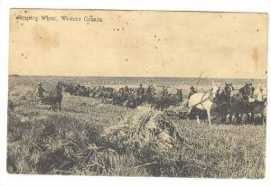 Reaping Wheat,Western Canada,00-10s