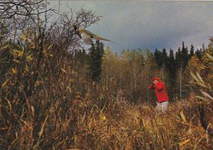 Pheasant Hunting In Canada