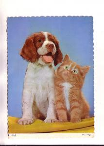 A Puppy and A Kitten, Pals, Photo FPC, Made in Canada