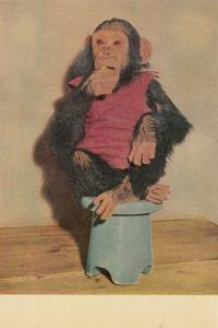 PEKING , China, 40-50s ; Zoo Animal ; Chimpanzee