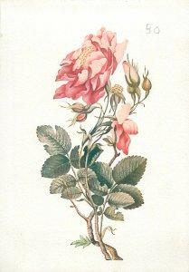 Iran miniature a bush of roses Postcard