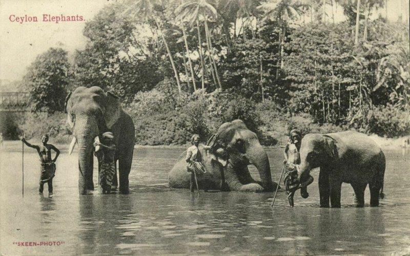 ceylon, Native Men with bathing Elephants (1911) Postcard
