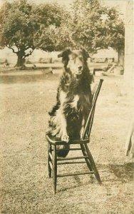 Bryan Ohio Dog posing on Chair RPPC Photo Postcard 21-4833