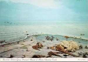 Shorebirds Habitat Group Provincial Alberta Museum Edmonton Unused Postcard F6