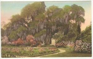 The Great Oak, Rose Garden, Charleston,SC, 20-30s