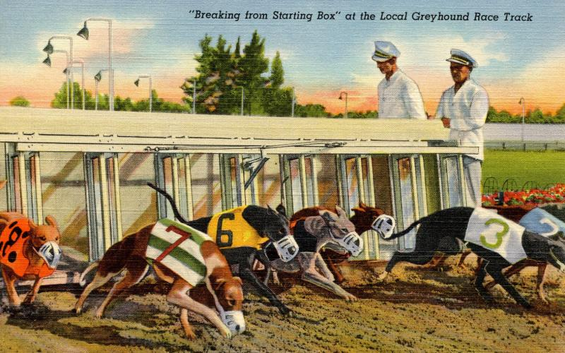 FL - Dog Racing. Greyhounds Breaking from Starting Box