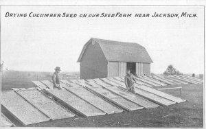 Jackson Michigan Drying Cucumber Seeds Farming Scene Vintage Postcard JI658227