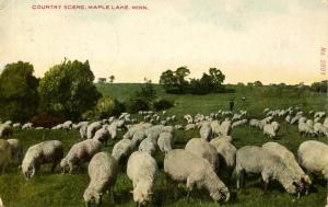 MN - Maple Lake. Country Scene with Sheep