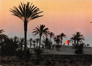 Tunisia Tunisie Coucher de Soleil Sunset Palm Trees