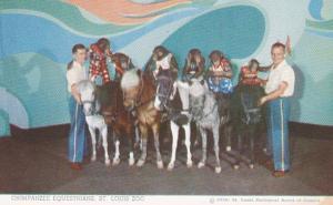 Chimpanzee Equestrians St Louis Zoo 1955