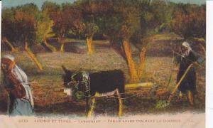 Donkey pulled plow , Labourage, North Africa, 00-10s