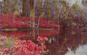 South Carolina Charleston Middleton Gardens
