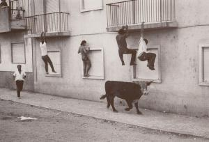 Portugal Climbing House Burglary Race From Mad Bull Chase Photo Postcard